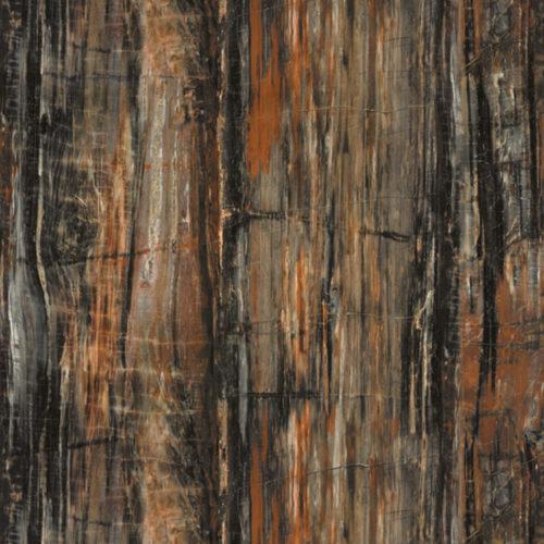 พื้นผิวและวัสดุ 3474 Petrified Wood
